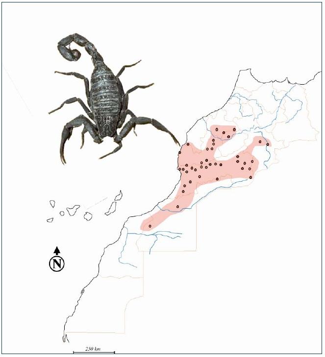 Figure 31 Scorpionisme, Epidémiologie et Facteurs de Risque au Maroc  cas de la province de Khouribga