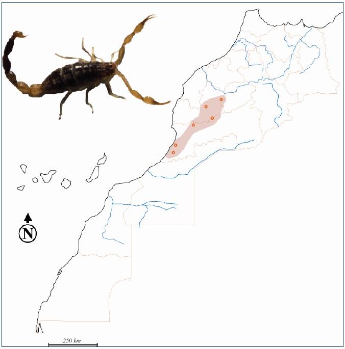 Figure 32 Scorpionisme, Epidémiologie et Facteurs de Risque au Maroc  cas de la province de Khouribga