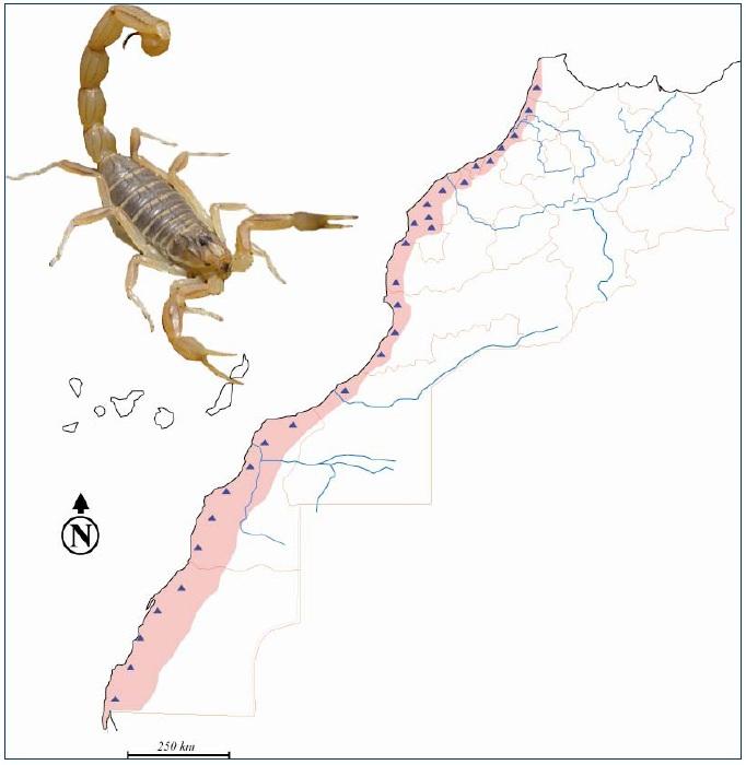 Figure 33 Scorpionisme, Epidémiologie et Facteurs de Risque au Maroc  cas de la province de Khouribga