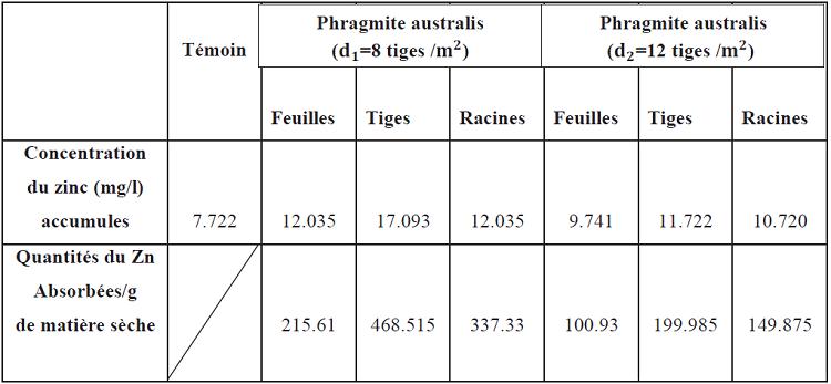 Accumulation du zinc au niveau des organes des Phragmite Australis