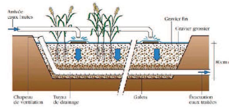 Schéma de filtre planté à flux vertical en coupe transversale