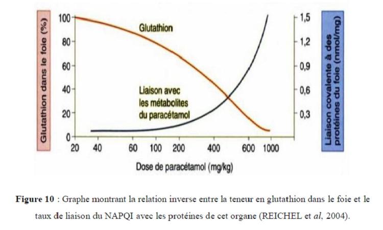 Figure 10 Graphe montrant la relation inverse entre la teneur en glutathion dans le foie et le taux de liaison du NAPQI avec les protéines de cet organe (REICHEL et al, 2004)