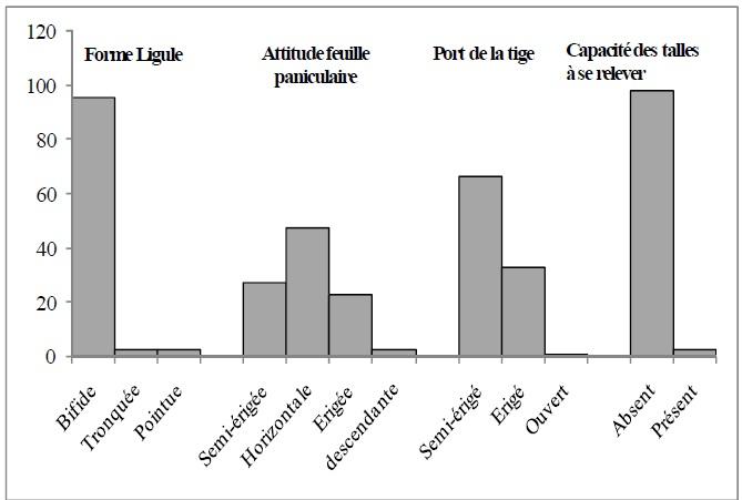 Figure 15 CARACTERISATION AGRO-MORPHOLOGIQUE DES ÉCOTYPES DE RIZ (Oryza spp.) DU BENIN