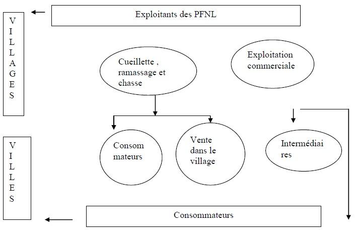 Figure 7 Etude de la contribution des ressources naturelles aux budgets des ménages ruraux  Cas du village BANGA (République Centrafricaine)