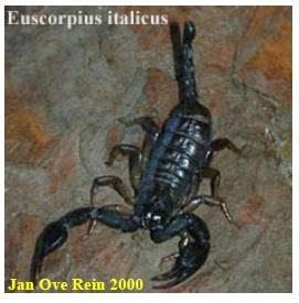 Figure 11 Scorpionisme, Epidémiologie et Facteurs de Risque au Maroc  cas de la province de Khouribga
