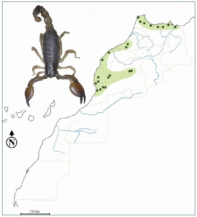Répartition des scorpions au Maroc