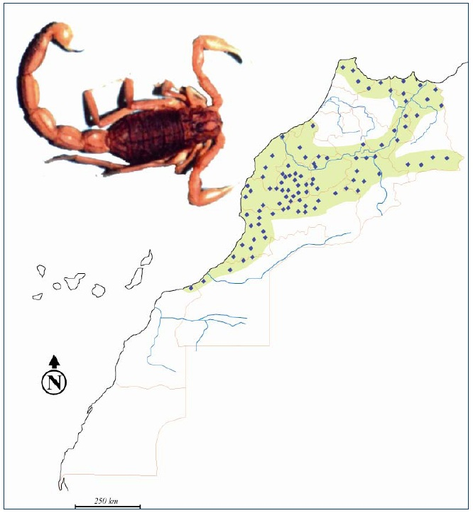 Figure 34 Scorpionisme, Epidémiologie et Facteurs de Risque au Maroc  cas de la province de Khouribga