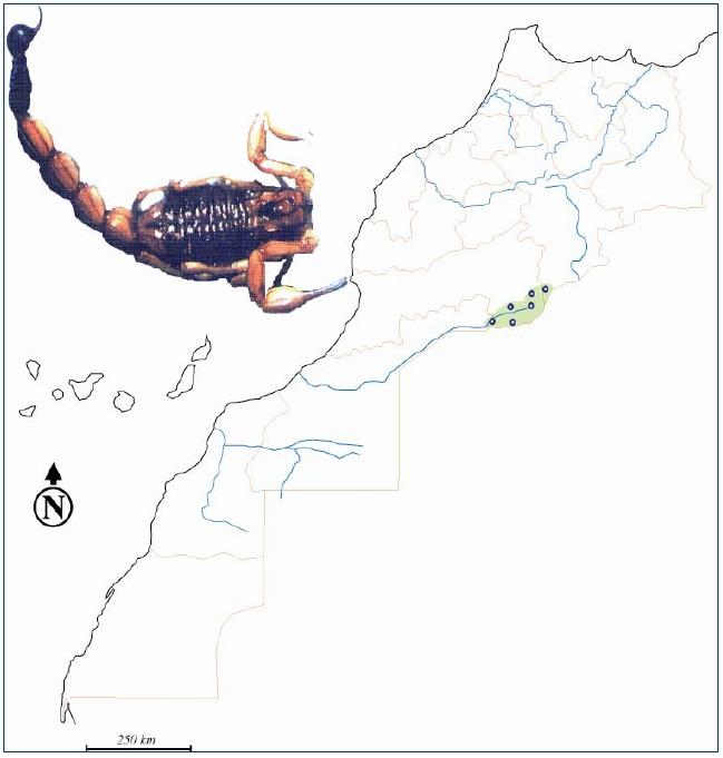 Figure 35 Scorpionisme, Epidémiologie et Facteurs de Risque au Maroc  cas de la province de Khouribga