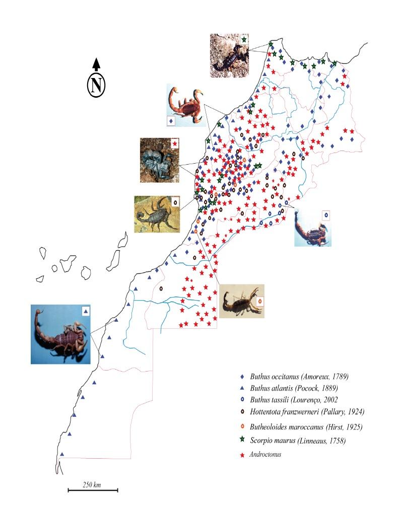 Figure 37 Scorpionisme, Epidémiologie et Facteurs de Risque au Maroc  cas de la province de Khouribga