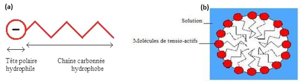 Schéma d'une molécule de tensio-actif, (b) Agencement des tensio-actifs en micelle