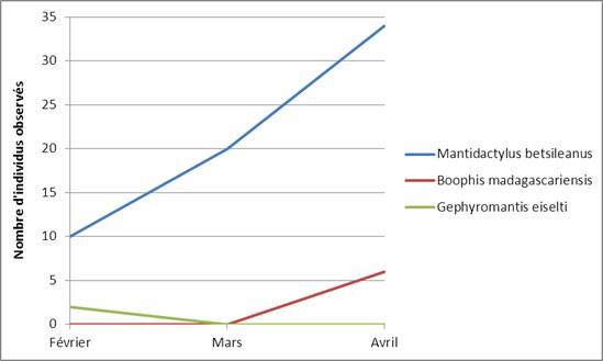 Evolution du nombre d'observations de 3 espèces au cours du temps