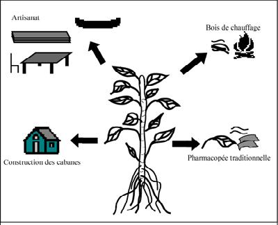 Les usages de la mangrove