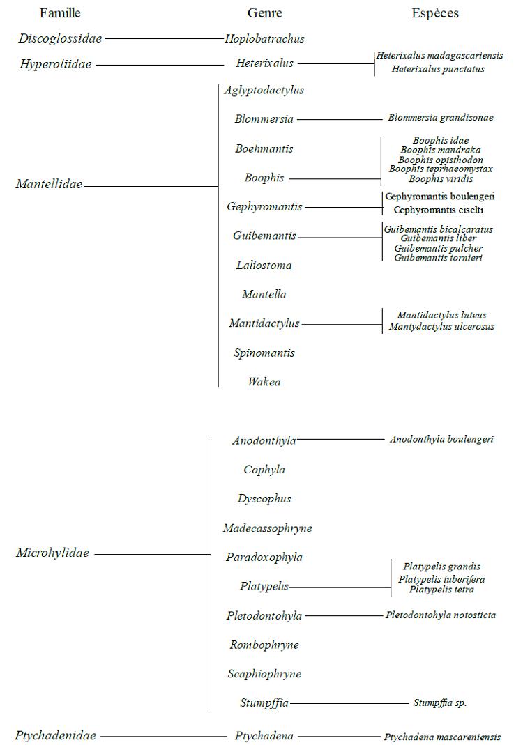 Systématique des amphibiens de Vohibola