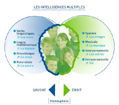 Les intelligences multiples et le cerveau