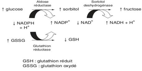 Déplétion du glutathion par la voie des polyols [Bonnefont-Rousselot., 2004]