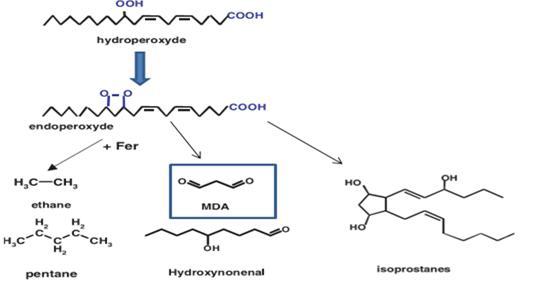 Produits terminaux de la peroxydation lipidique [Favier., 2003]