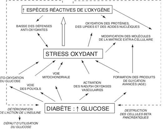 Relation entre hyperglycémie et stress oxydant [Bonnefont-Rousselot., 2004]