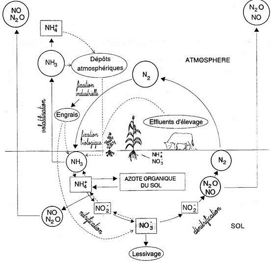 Cycle de l'Azote en milieu agricole