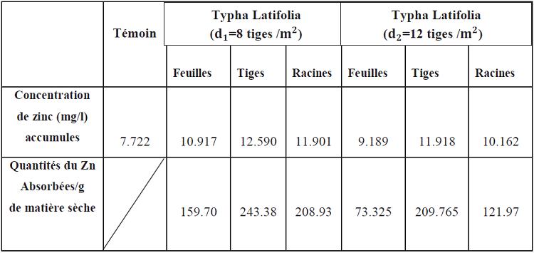 Accumulation du zinc au niveau des organes du Typha Latifolia