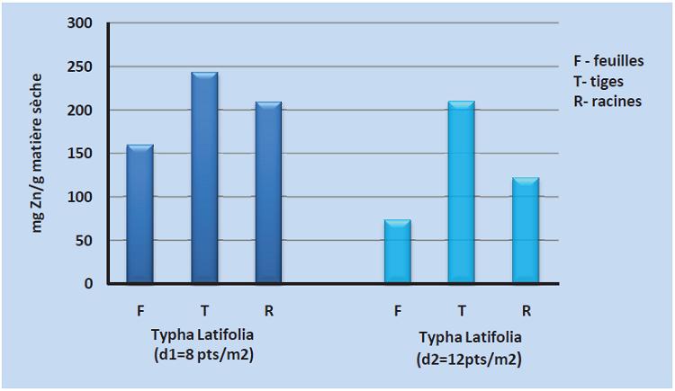Accumulation du zinc au niveau des organes du Typha Latifolia1