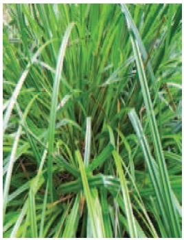 Le Carex