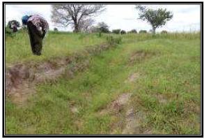 Zone de Koutango, profil (18 KTO)
