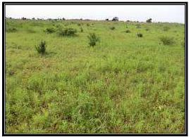 Zone de Ndiaffate environnement du profil (07ND)